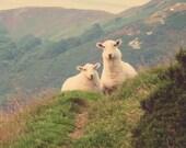 Sheep / Fine Art Photography / Wall Print