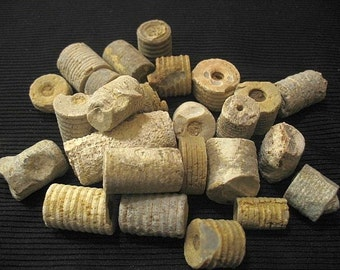 Buy 2 get 1 Special - Crinoid Fossil Stems Rough, 1/2 lb lots, Indian money