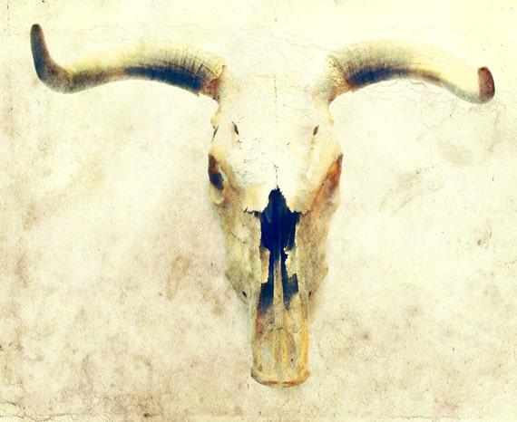 cow skull and desert - photo #10