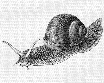 Snail Printable Graphic Illustration Digital Clip Art High Quality Image Instant Download 0071