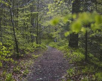 PATH photography print, Scotland woodland landscape, 8x12