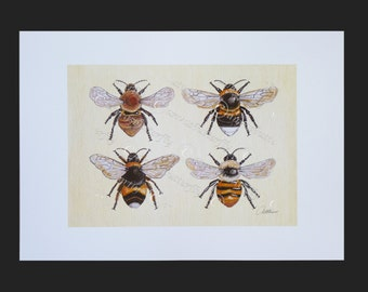 Bee Print Bee Picture Bee Painting  Bees on Canvas.Hand drawn and painted ink,watercolor,acrylic paints.Shrill/Carder Bees and Bumble Bees