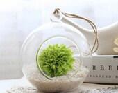 Glass Hanging Planter Air Plant Terrarium Container Vase -- Home decoration -- Wedding Decoration