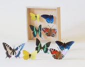 "Wall decoration ""Butterflies Diversity"", peacock butterfly, Brimstone, Swallowtail Butterfly, Wall art (single-sided)"