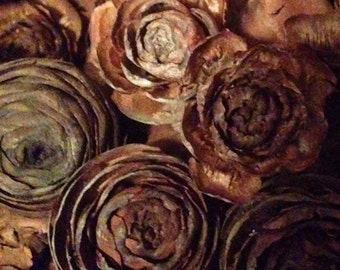 50 Small Rose Pine Cones  from The Deodar Cedar Tree ( Cedrus  Deodara )