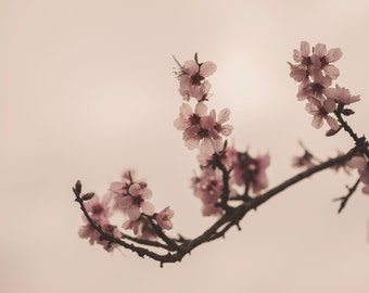 Spring photography, Cherry blossom signed photograph. Flower Photo