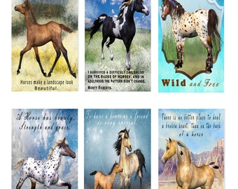 Beautiful Horses Tags