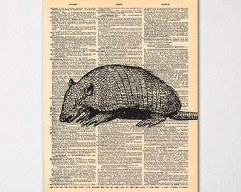 Vintage Armadillo Print on Dictionary Page / Nature Wall Art / Hand Drawn Cabin Decor