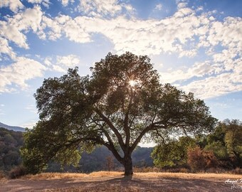 Tree of Life, Oak Tree, Sunburst wall art, rustic wall decor, country, nature decor, landscape, fine art landscape print