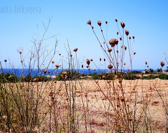 Mediterranean photo - Paphos, Cyprus  - Fine Art Photo - Nature Photography - Print 8x12 - landscape photo - botanical print - seascape