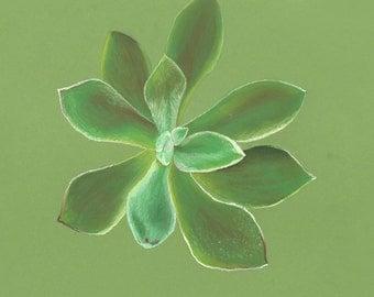 Original pastel drawing of a succulent
