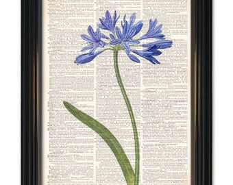 Beautiful Flower on dictionary page art print.Botanical art dictionary book page print. Buy any 3 prints get 1 Free or Buy 4 get 2 FREE!
