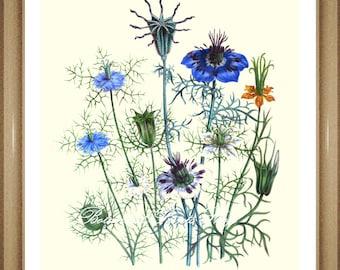 "Botanical Print. Blue Flower Print. Nigella. Flower Art. Botanical Wall Art. 8x10"""