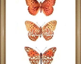 """Butterfly Print. Fritillary. Butterflies Print. 8x10"""""""