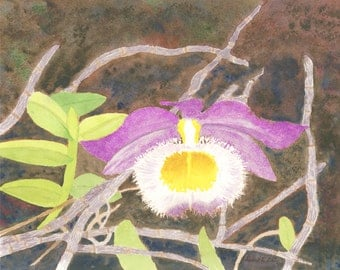 "LONE ORCHID, Original Watercolor, 11"" X 15"" Horizontal"