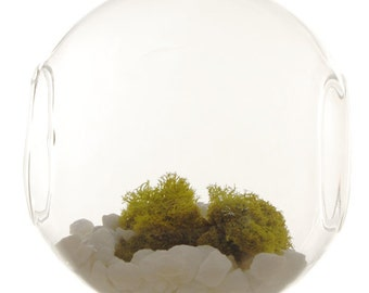 Plant Terrarium Glass Open Orbs (Pack of 2 pcs)