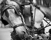 Photography of horses, valentines gift, Fine Art print, black white, home decor, gift horse lover, interior design, romantic wall hanging
