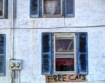 Free Cats