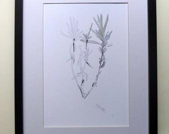 Lavender (fine art print of a Lavender plant).