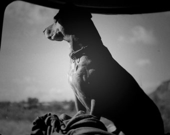 Sun Goddess- Airstream and dog photography photo black and white print