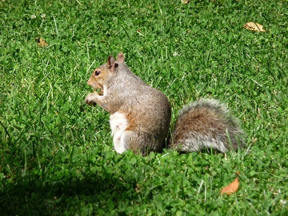 squirrel singles Squirrel's best free dating site 100% free online dating for squirrel singles at mingle2com our free personal ads are full of single women and men in squirrel looking for serious relationships, a little online flirtation, or new friends to go out with.