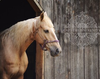 Beautiful horse stepping out of her barn