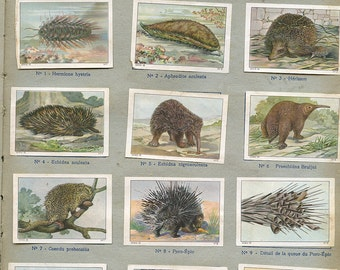 "French ""Animaux a Toison Epineuse"" Porcupine Hedgehog Stickers Page from Children's Book 1930s Stamps Labels ""Prickley Animals""   s16"
