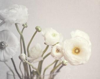 Fine Art Photo, Ranunculus Print, White Ranunculus Flowers, Black and White Art, Flower Print, Gardener, Flower Art, Home Decor, Square Art