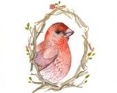House Finch Portrait - Archival Print of original watercolor - nursery art, bird lover