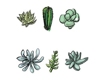 One Dozen Succulents