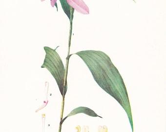 1918 Botany Print - Sobralia Sessilis Orchid - Vintage Antique Flower Art Illustration Book Plate for Framing