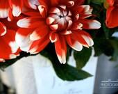 Red Flower Print, Art for Kitchen, Dining Room, Living Room, Craft Room Decor, Botanical Print, Wall Decor, Dahlia Print, White