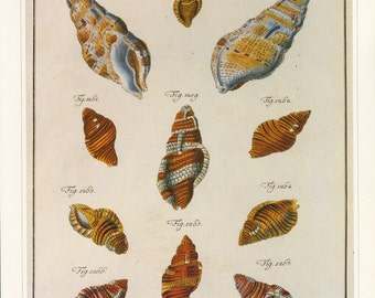 Shells Print Book Plate SALE Buy 3, get 1 FREE