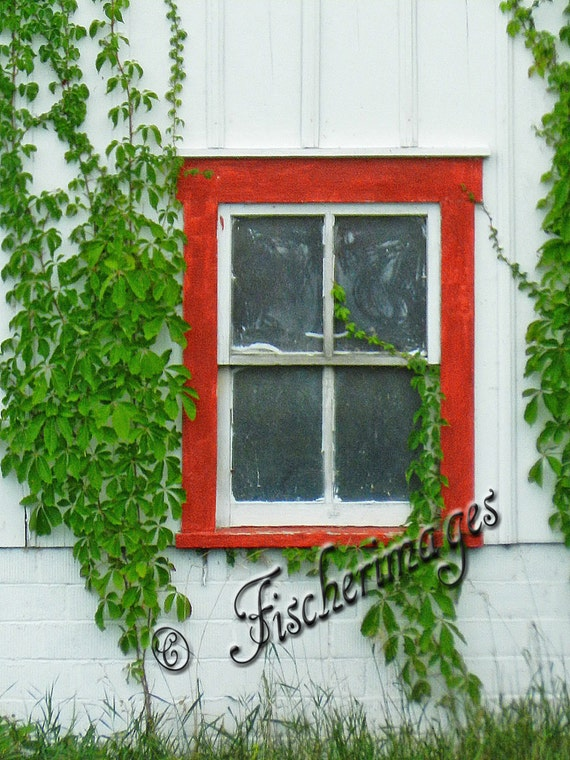 Red Window & Green Vines Wall Art Home Decor Digital Download Fine Art Photography