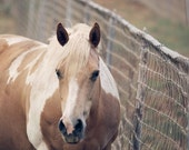 Animal Photography Rustic country photography Horse photography  Country Wall Decor  Home decor Fine Art Photography Print