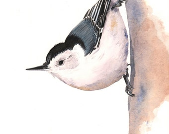 Nuthatch painting watercolor painting,  5 by 7 print watercolor painting, N2014, wall art, nuthatch print