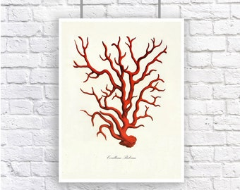 Large Red Coral Vintage Style Nautical Art Print Beach House Decor