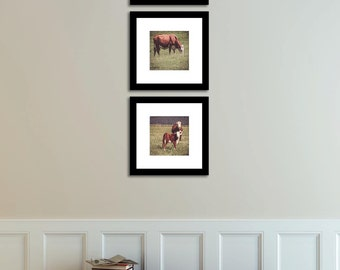 Set of 3 Cows Art Print New Zealand Nature Animal Photography Baby Mom Cow Rustic Hunter Green Grass Field Home Decor Brown and White Cows