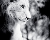Lion Fine Art - Monochrome Animal Photography - Black and White Wildlife Home Decor - Wall Art Contemporary Photography
