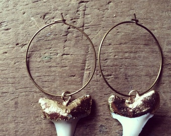 Gold Edged Real Shark Tooth Earrings