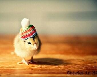 Photo Print 8x10 Chick Wearing A Rainbow Pom Pom Hat Photograph