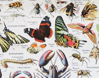 Antique French Dictionary Page - Insects, Butterflies, Crustaceans - 1922 Original Engraved Lithograph Print - Vintage French Country Decor
