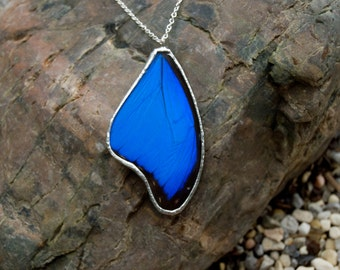 Free Shipping.  Real Blue Morpho Butterfly Wing Encased in Hand Cut Glass and Soldered Pendant Necklace