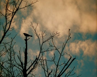 Nature Photography, Bird Photography, Sky, Clouds, Trees, New England, fPOE, The Keeper