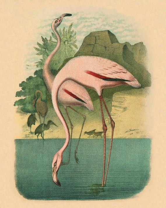 Items similar to Vintage Pink Flamingo Antique prints Wall ...