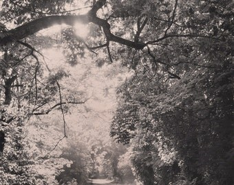 Morning Light, Tree Photo, Path through Trees, Woodlands & Sunlight, Sepia Photo, Indiana Road Photo, Instant JPEG File Digital Download