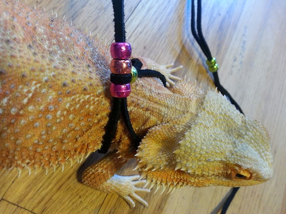 Leashes and Harnesses • Bearded Dragon . org
