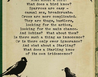 WHAT A BIRD KNOWS ~ Giclée Print.
