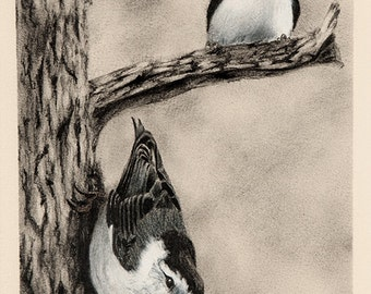 Bird Drawing in Pencil ~ Bird Art ~ White Breasted Nuthatches ~ FREE SHIPPING