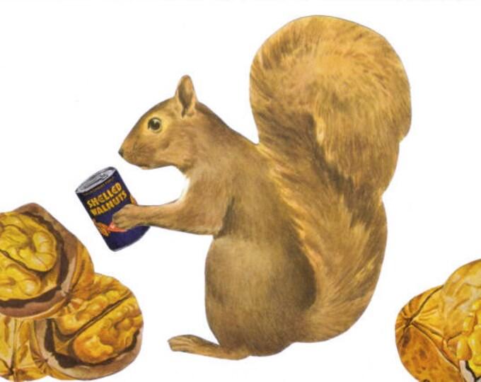 Nutty Squirrel Art Collage, Cute Kitchen Artwork